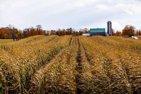 acreage: a farmers crop field