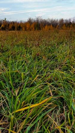 가을의 초원 스톡 콘텐츠