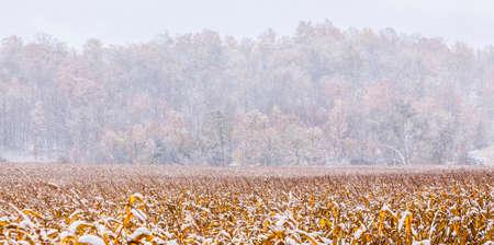 field crop: a farmers crop field