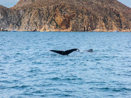 marine life: Marine Life on a Whale Watching Tour in Mexico Stock Photo