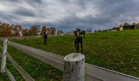 Horse Paddock View in Beautiful Fall Landscape