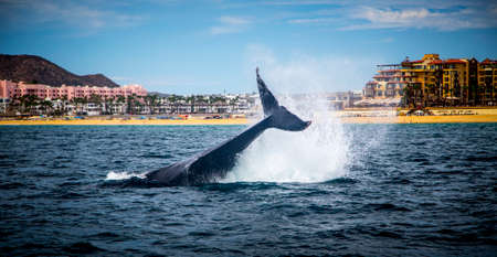 whale watching: Marine Life on a Whale Watching Tour in Mexico Stock Photo