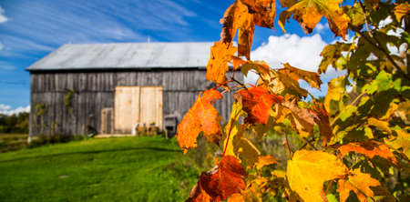 antiquated: Colorful Fall Leaves and Old Barn