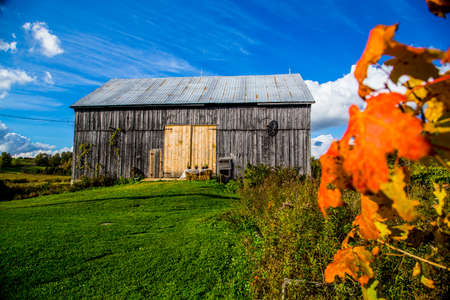 canada agriculture: Colorful Fall Leaves and Old Barn