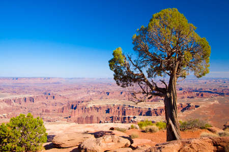 canyonlands: overlooking the rugged canyonlands landscape
