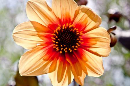 prachtige bloemen in bloei
