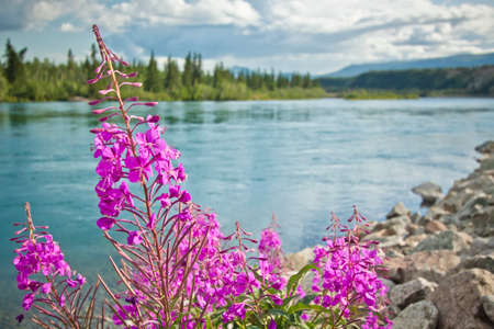 whitehorse: beautiful flowers in bloom