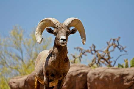 wilde dieren in hun natuurlijke omgeving Stockfoto