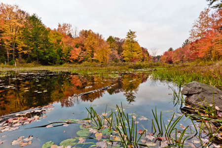 muskoka: scenic view of wetlands in autumn Stock Photo