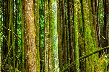 フォレスト内のツリーの背景 写真素材