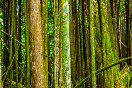 background of trees in forest