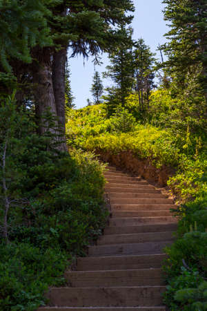 stairway in forest
