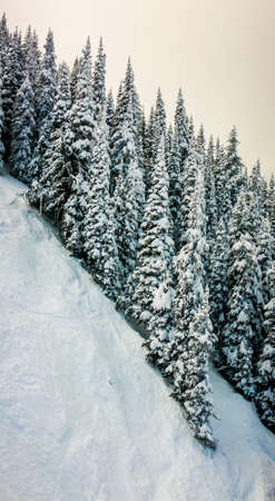steep: snow covered trees on steep mountain slope