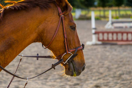 horse in the equestrian ring