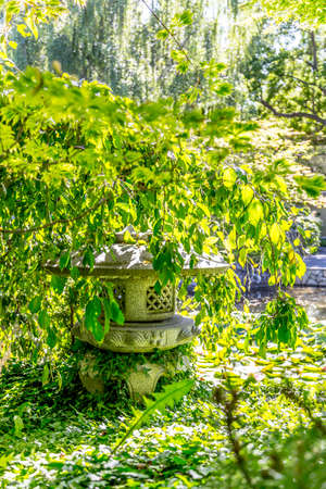 lush green vegetation Stock Photo