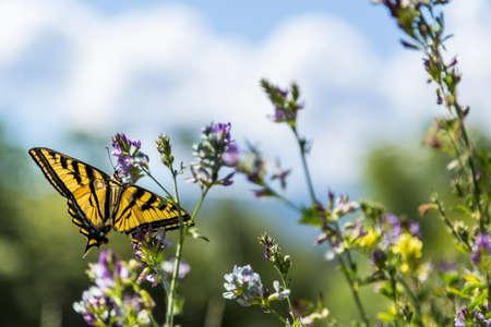 花に蝶します。 写真素材