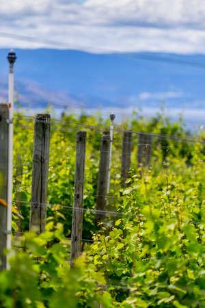 Vineyard view 免版税图像