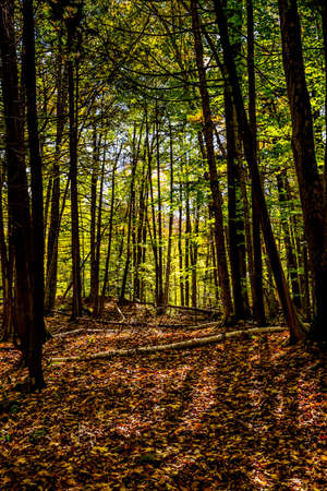 trees in the forest view