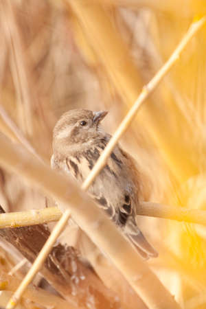 closeup of a tit bird wren
