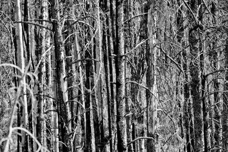 森の白黒ビューで木