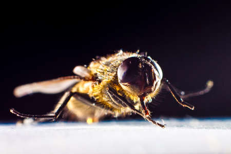 housefly view closeup