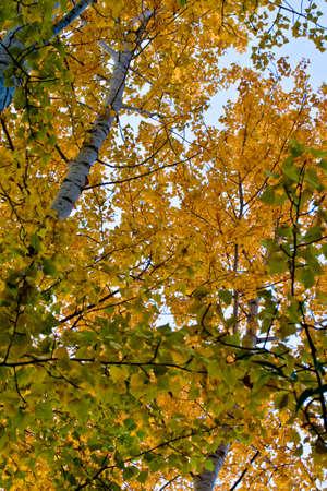 木の葉のクローズ アップ 写真素材