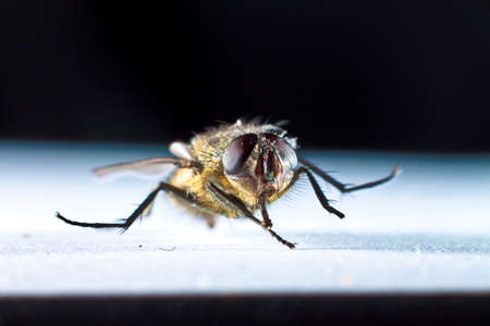 closeup on a housefly captured in macro