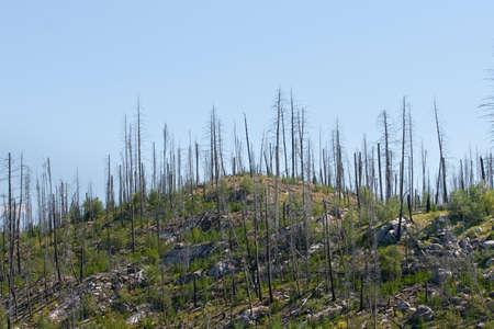 verbrand boslandschap
