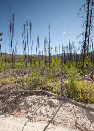 burned forest landscape