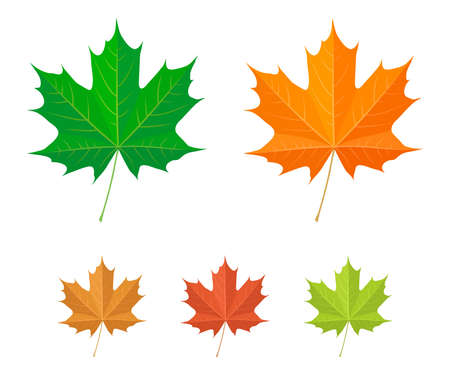 red maples: Maple leaf icons Illustration