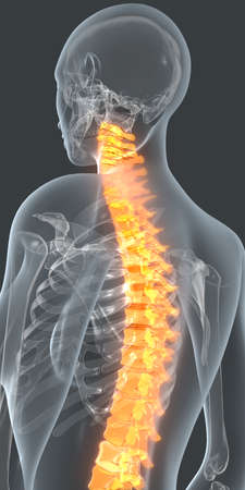 simulate: The spine is highlighted in orange to simulate back pain