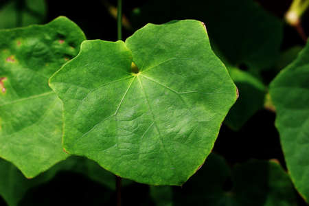 Leaves green polygon shaped
