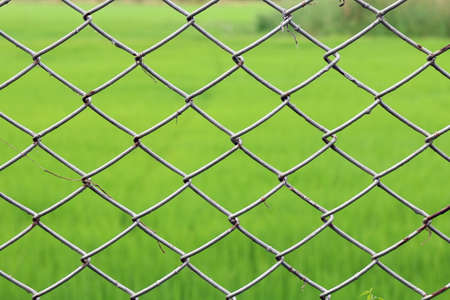 Metal netting, Mesh fence iron Rusty barbed wire detention center security, Chain link fence close up on green nature background, Metal netting for background