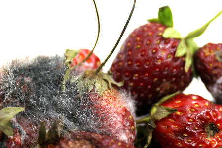 Strawberry rot, Rotten fruit, fruit moldy, Rotten fruit, Fruit Strawberry rot and mold close up