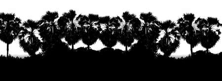 Black White color Row sugar palm tree branch silhouette background, Tree shape palm background jungle, Picture Tree of art Black White color wallpaper backdrop