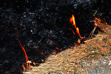 Fire, Fire burning hay (Selective focus)