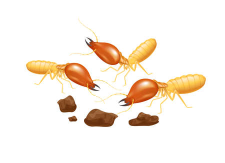 illustration termites isolated on white background, insect species termite ant eaten wood decay and damaged wooden bite, cartoon termite clip art, animal type termite or white ants Vector Illustration