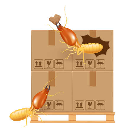 termite bites eat paper boxes brown isolated on white background, termites and wood pallet with cardboard boxes in factory warehouse, termites walking on corrugated case, termite on crate damaged box Vector Illustration