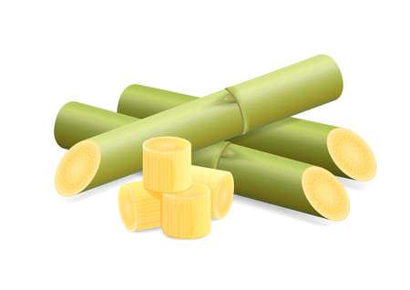 Illustration de la canne à sucre, de la canne à sucre, des morceaux de canne à sucre fraîche verte, de la canne à sucre coupée isolé sur fond blanc Vecteurs