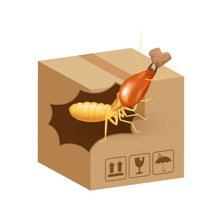 termite bites eat paper boxes brown isolated on white background, termites on cardboard boxes damaged, termites walking on corrugated case, termite on crate damaged box Stock Illustratie
