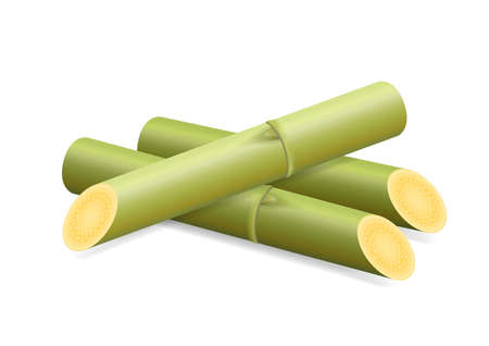Illustration Sugar Cane, Cane, Pieces of Fresh Sugarcane Green, Sugar Cane Cut Isolated on White Background Иллюстрация
