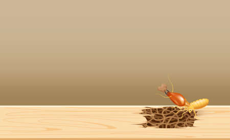 termites at wood, termite nest at wooden wall, nest termite at wood decay the door sill architrave, nest termite background and copy space, damaged wooden window door by eaten termite or white ant Illustration