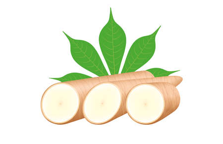 cassava fresh and leaf isolated on white background, raw cassava cut slice for tapioca flour industry or ethanol industry, pile yucca cassava tuber, raw manioc cassava in top view Illustration