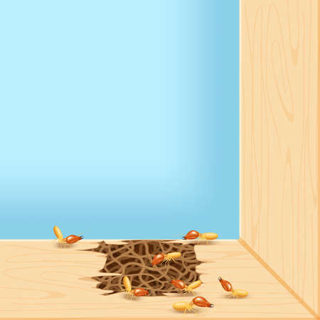 termites at window, termite nest at wooden wall, nest termite at wood decay the door sill architrave, nest termite background and copy space, damaged wooden window door by eaten termite or white ant