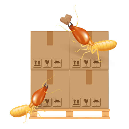 termite bites eat paper boxes brown isolated on white background, termites and wood pallet with cardboard boxes in factory warehouse, termites walking on corrugated case, termite on crate damaged box