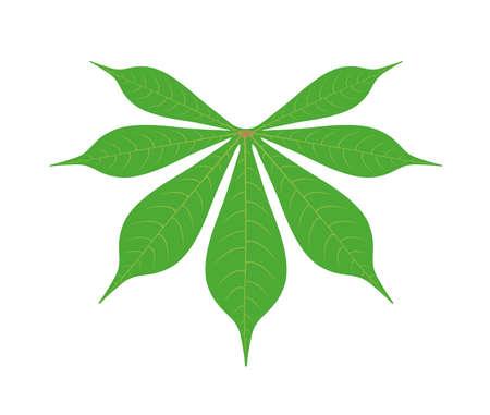 cassava leaf isolated on white background illustration Illustration