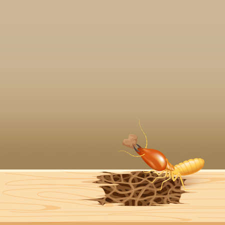 termites at wood, termite nest at wooden wall, nest termite at wood decay the door sill architrave, nest termite background and copy space, damaged wooden window door by eaten termite or white ant