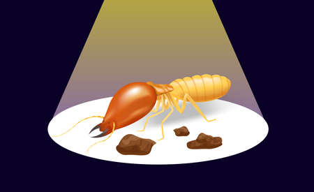 illustration termite on the dark background and spotlight shine, insect species termite ant eaten wood decay and damaged wooden bite, cartoon termites clip art, animal type termites or white ants 矢量图像