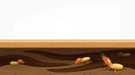 termite nests in the wood plank, termites destroy table, door, and window in the wooden house, termites bite the wood wall, termite burrows, termite hole in the wooden furniture for copy space banner Vector Illustration