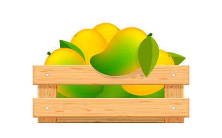 ripe mango in wood crate box isolated on white, mango fruit pack in wooden crate, illustration mango pile and crate wood for clip art, yellow mango heap in wooden box 일러스트